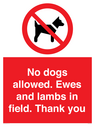<p>No dogs allowed. Ewes and lambs in field. Thank you</p> Text:
